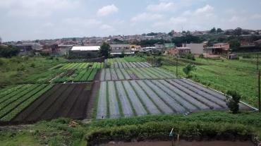 Plantações no entorno de Suzano.